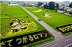 """Nghệ thuật """"vẽ tranh"""" độc đáo trên cánh đồng lúa Nhật Bản"""