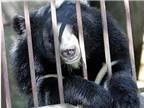 Mật gấu đâu thể chữa ung thư