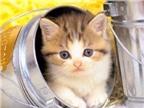 Giá trị chữa bệnh của mèo