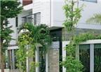 Không nên trồng cây to trước nhà