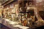 Độc đáo bảo tàng...dương vật