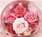 Hoa hồng chữa bách bệnh