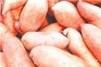 Chống ung thư vú từ khoai lang, cà rốt