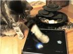 Trò chơi iPad dành cho... mèo