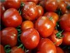 Cà chua -
