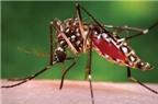 Chẩn đoán và điều trị sốt xuất huyết Dengue