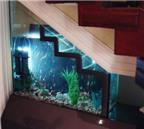 Bạn có nên đặt bể cá ở gầm cầu thang?
