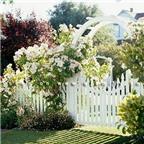 Cổng vườn lãng mạn