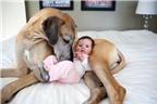 Cô chó 'bảo mẫu' nổi tiếng trên mạng