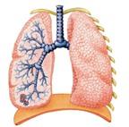 Kiểm soát chứng bệnh tắc nghẽn phổi mãn tính