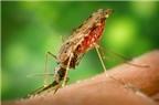 Phòng bệnh sốt rét bằng cách nào?