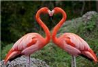 Dành cho người đang yêu