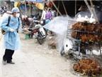 Dịch cúm gia cầm có nguy cơ bùng phát rất cao