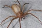 Bài thuốc hay từ nhện
