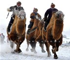 Đặc sắc lễ hội đua lạc đà