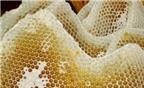 Sáp ong - Vũ khí mới chống lại bệnh ung thư