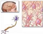 Ngăn ngừa bệnh suy giảm trí nhớ bằng thuốc