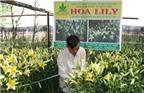 Bí quyết trồng hoa ly ly quanh năm