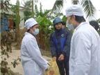 Dịch cúm gia cầm có nguy cơ bùng phát