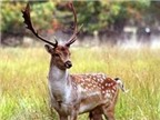 Thuốc bổ can thận từ động vật