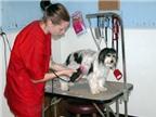 Học nghề thú vị: trang điểm cho thú cưng