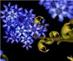 """Kinh ngạc với hoa """"xếp"""" từ cơ thể người"""