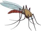 Cách phòng tránh và xử trí khi bị côn trùng tấn công