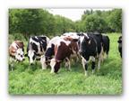 Sữa tốt nhất cho sức khỏe: sữa hữu cơ
