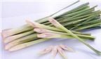 Tác dụng phòng và chữa bệnh hữu hiệu của cây sả