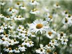 Cách chọn nước hoa mùa hè phù hợp với tính cách của bạn