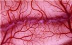 Chế tạo thành công mạch máu nhân tạo