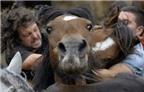 """Lễ hội """"vật ngựa"""" ở Brazil"""