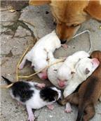 Chuyện lạ: Chó sinh ra mèo