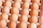 Cách chọn và bảo quản trứng
