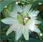Hoa… thần dược của sắc đẹp