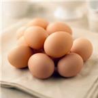 Trứng đà điểu, ngỗng, ba ba tốt như thế nào?