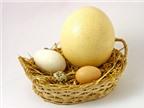 Trứng ngỗng có tốt hơn trứng gà?
