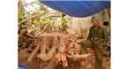 Nghệ nhân biến rễ cây vứt đi thành đồ tiền tỉ