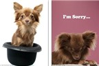 'Next Top Model' dành cho... cún