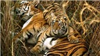 Nhiều loại động vật quý hiếm trước nguy cơ tuyệt chủng