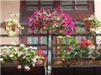 Bí quyết giữ hoa tươi lâu?