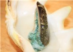 Bào ngư - món ăn xa xỉ