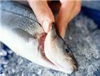 Cách nhận biết hải sản bị ngâm ướp urê