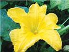 Lợi ích từ hoa
