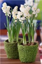 Những mẫu cắm hoa bàn tiệc trong mùa cưới