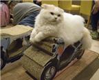 Những chốn đặc biệt dành cho du khách yêu mèo