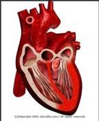 Dấu hiệu viêm cơ tim