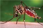 Một số mẹo chữa muỗi đốt hiệu quả cho bé