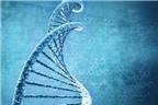 Chế tạo thành công bóng bán dẫn từ vật liệu di truyền