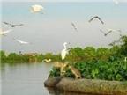 Đầu tư 1.600 tỉ cho du lịch sinh thái ở Tiền Giang